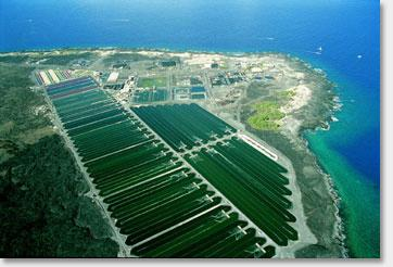 Spirulina Ponds Hawaii